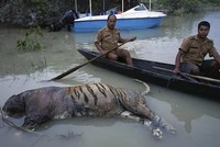 Over a dozen rare rhinos and a tiger have died along with 215 other animals in a flooded wildlife sanctuary in north-eastern India, the park's director said Sunday.  India's monsoon rains...