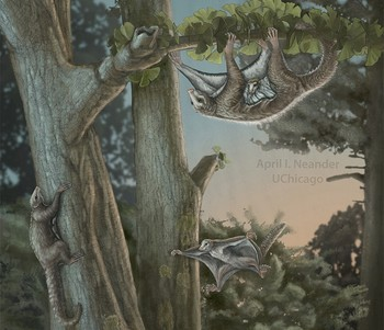 An artist's depiction of a mother and baby Maiopatagium suspended in roosting posture climbing a tree trunk in Jurassic forest, is shown in this July 31, 2017 handout photo (Reuters Photo)