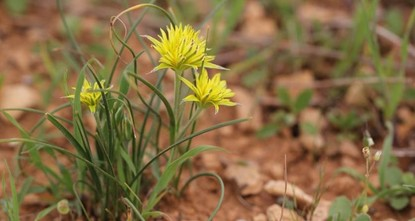 Two new plants from Turkey enter world botanical literature