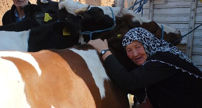عائلة قروية تُبكي تركيا بمشاهد فقدانها بقراتها بصاعقة جوية