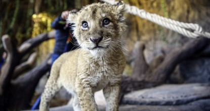 Big park for big cats: Istanbul's lion zoo opens for visitors