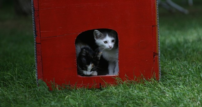 Old ballot boxes receive makeover, become cat houses
