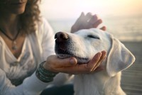 Legal responsibilities of becoming a dog owner