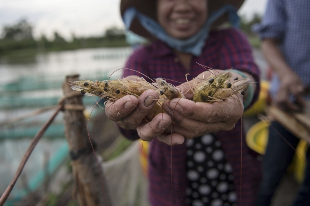 A shrimp farmer smiles as she shows shrimp she harvested from her pond in the My Xuyen district in southern Vietnam.