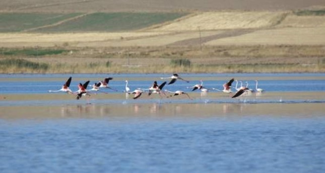 Absence of flamingos causes cancellation of Van festival