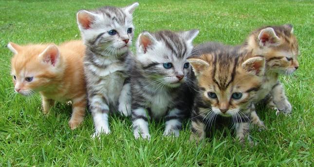 World Cat Day celebrated in Turkey