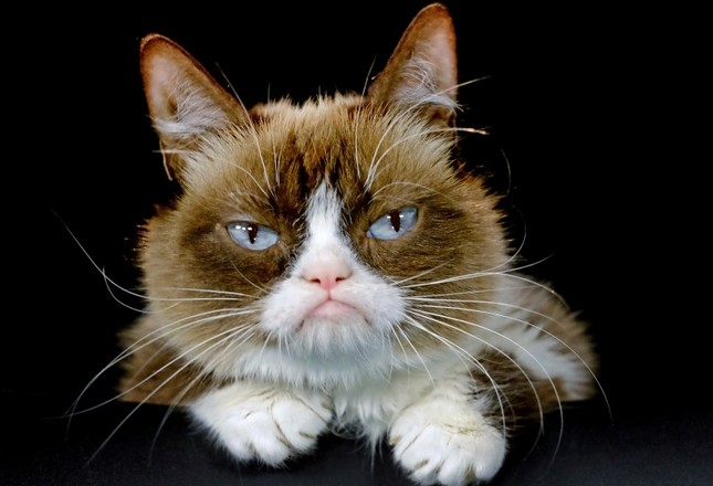 This Dec. 1, 2015 file photo shows Grumpy Cat posing for a photo in Los Angeles. (AP Photo)