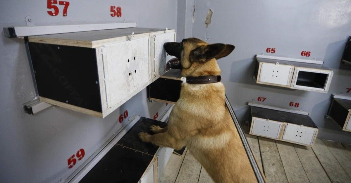 Dogs undergo training for sniffing different types of drugs, explosives and other illegal substances. (DHA Photo)