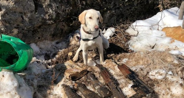 Detection dog stands over weapons seized from PKK depots in eastern Turkey. (AA Photo)