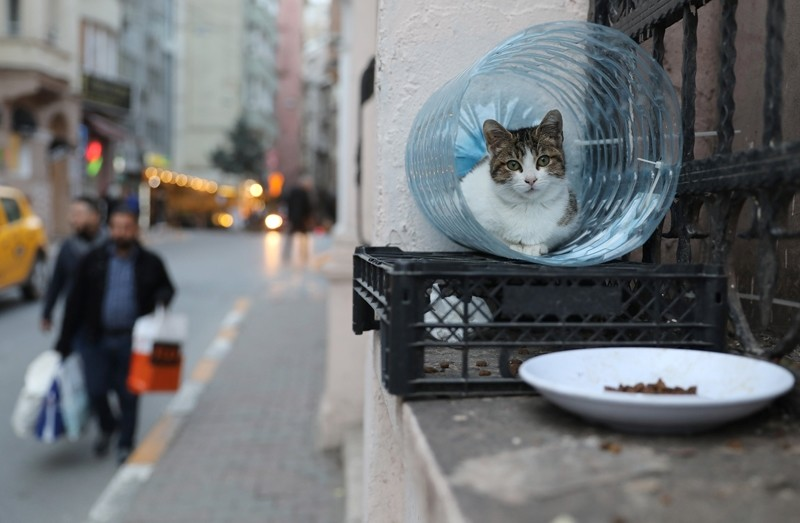 A cat lies in a shelter made from a water bottle in Istanbul, Turkey, January 2, 2018. (Reuters Photo)