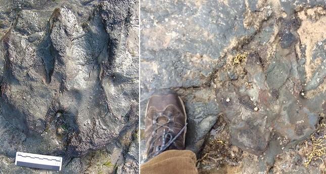 Australien: 115 Millionen Jahre alter Dino-Fußabdruck beschädigt