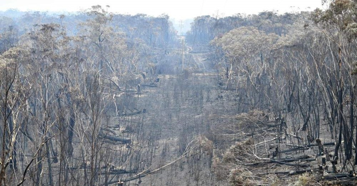 A view of landscape littered with burnt trees after a bushfire in Mount Wilson in the Blue Mountains, Dec. 18, 2019. (AFP Photo)