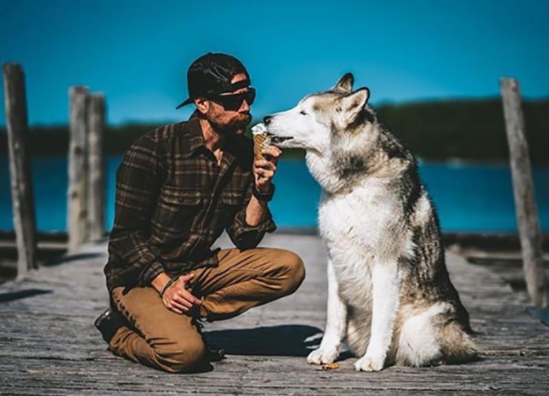 Loki the Wolfdog' nears 2 million followers on Instagram