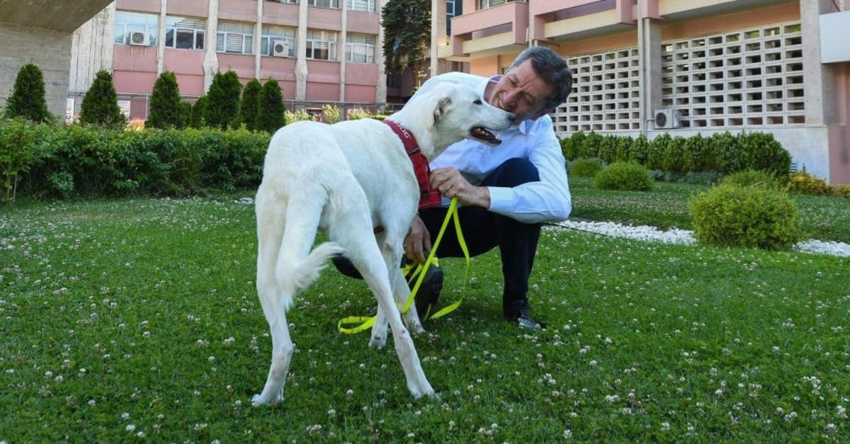 National Education Minister Ziya Selu00e7uk with Pergel, a stray dog adopted by the ministry.