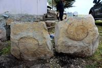 Giant snail fossil found in Turkey's Adıyaman