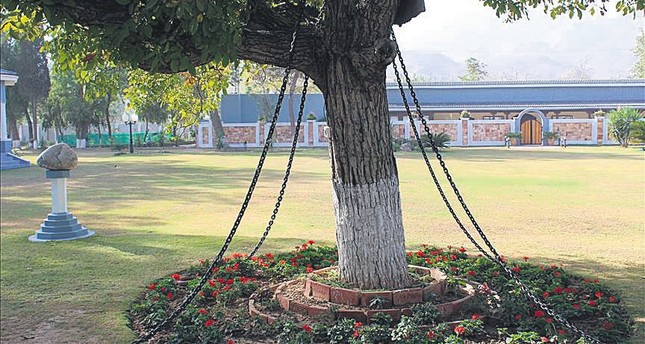 Tree in Pakistan remains 'under arrest' for 120 years