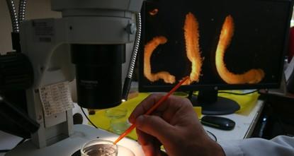 باحثون يكتشفون 56 نوعاً جديداً من الكائنات البحرية في تركيا