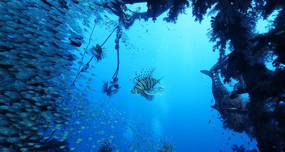 pA new report has stated that all coral reefs in the world could be gone within 30 years if carbon emissions are not reduced to slow global warming./p  pThe report by the United Nations...