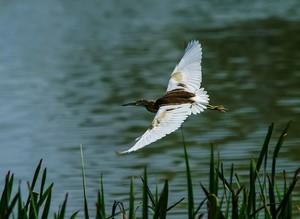Водно-болотные угодья Караджабей стали домом многим видам животных и растений