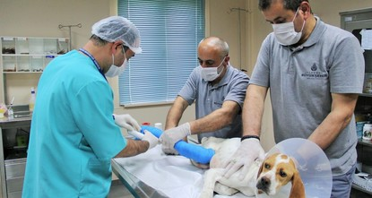Municipality provided vet services to nearly 140,000 Istanbul strays last year