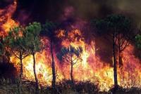 Sibirien: Tausende kämpfen gegen Brände in Wäldern