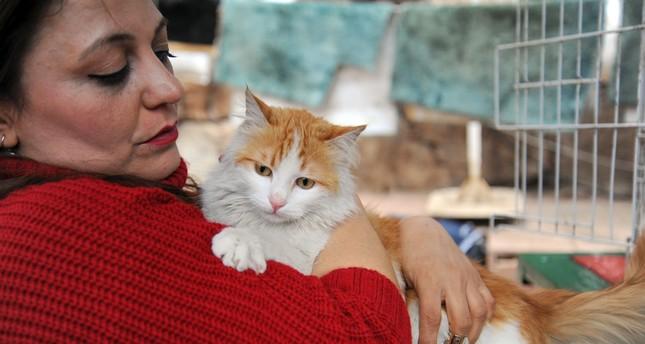 من تحت الأنقاض إلى النجومية.. حكاية قطة سورية وجندي تركي