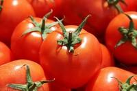 Das israelische Ministerium für Landwirtschaft und Entwicklung kündigte an, dass sie die Zollgebühren für eine bestimmte Menge an Tomaten, die aus der Türkei importiert werden, aufgehoben...