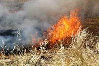Arab-owned farmland set afire in YPG-held areas of Syria, local sources say