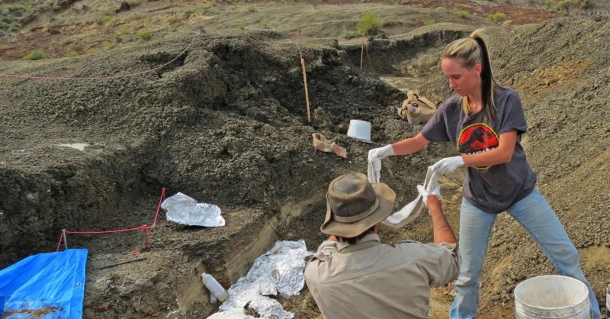 This photo taken and handout on March 29, 2019 by the University of Kansas,shows Robert DePalma(L)and field assistant Kylie Ruble(R) excavate fossil carcasses from the Tanis deposit (AFP Photo)