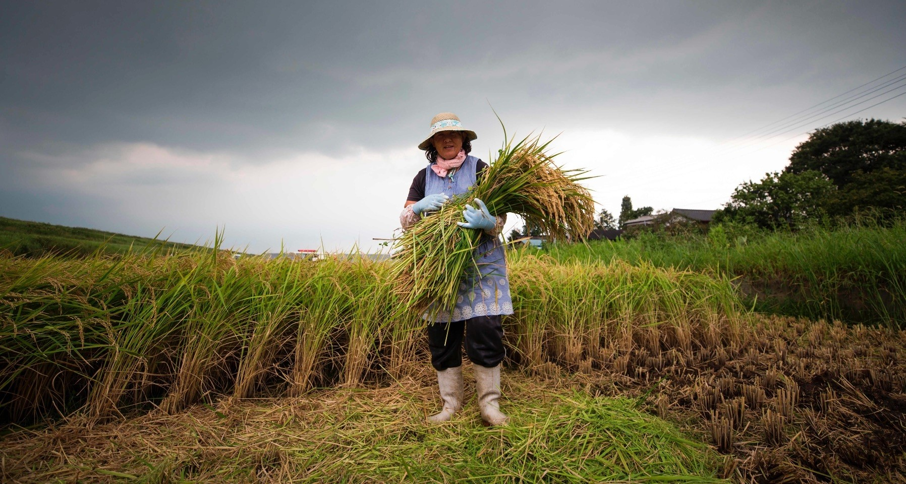 Japanese farmer Mayumi Oya poses with harvested rice plants on a paddy field in Kazo city, Saitama prefecture, Aug. 31.