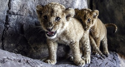 Зоопарк крупных кошек в Стамбуле открылся для посещения