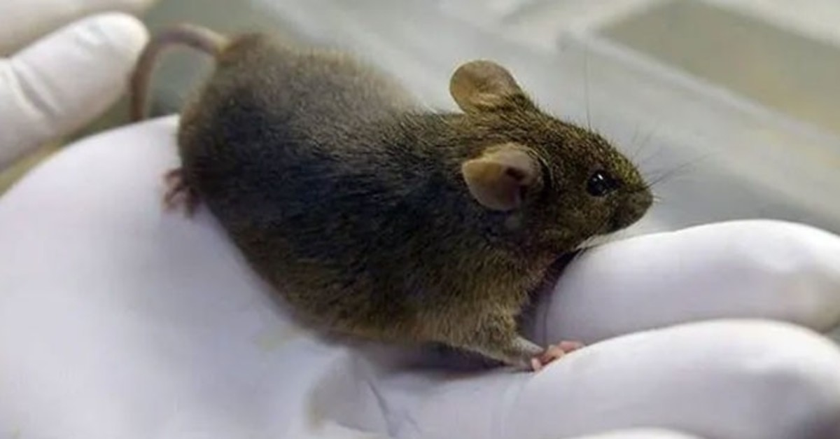 Male mice who spend time in space are found to be able to have offspring.