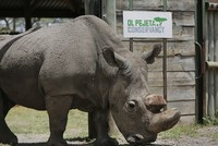 World's last northern male white rhino in Kenya dies