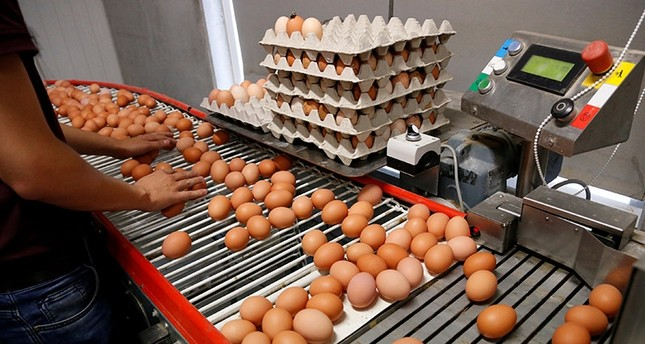 A worker inspects freshly laid eggs on a production line at a poultry farm in Wortel near Antwerp, Belgium August 8, 2017. (Reuters Photo)