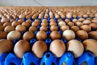 Im Skandal um mit Fipronil belastete Eier beruft die EU eine Krisensitzung ein. EU-Gesundheitskommissar Vytenis Andriukaitis erklärte am Freitag gegenüber der Nachrichtenagentur AFP, er habe ein...