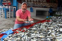 Mackerel returns as Marmara fishermen's prey for first time in 40 years