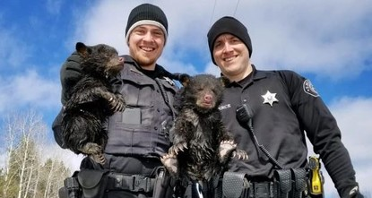 Wisconsin deputies save 2 bear cubs trapped in flooded den