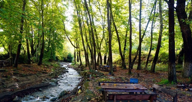 Eastern Thrace's Ganos Mountain a palette of autumn colors