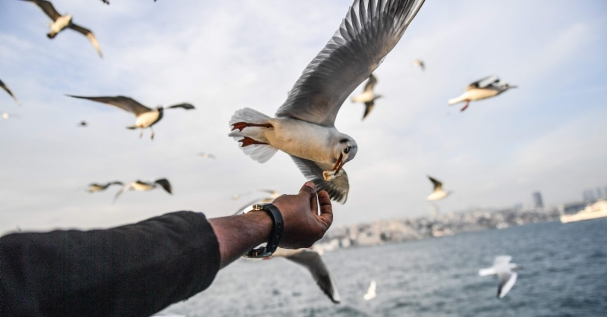 A man feeds a seagull flying behind a ferry on the Bosporus as the sun shines in Istanbul on Jan. 4, 2018. (AFP Photo)