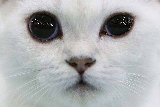 Internationale Katzenmesse in Moskau lockt zehntausende Liebhaber an