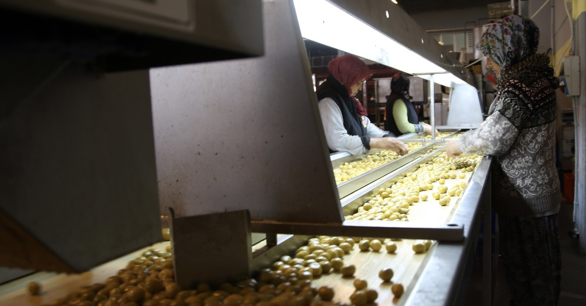 Around 56% of olive exports in the 2018-2019 season went to 22 EU countries.