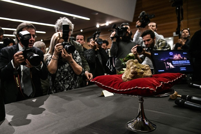 A truffle weighing 850 grams is displayed during the 19th World White Truffle auction in Alba, northern Italy, on Nov. 11, 2018. (AFP Photo)