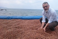 Turkey nets nearly $1B from hazelnut exports in 5 months