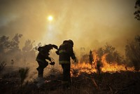 11 killed, thousands displaced as Chile battles devastating wildfires