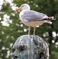 Superstitions busted: Bird droppings on your head
