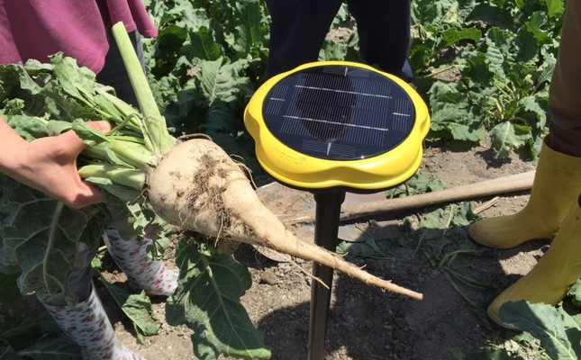 Farmers using Nooli, a new field sensor designed for farmers.