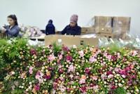 مصدرو أكاليل الزهور بأنطاليا يتوقعون مبيعات تتجاوز 10 ملايين دولار