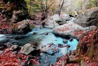 Осенние пейзажи привлекают туристов в лес неподалеку от Стамбула