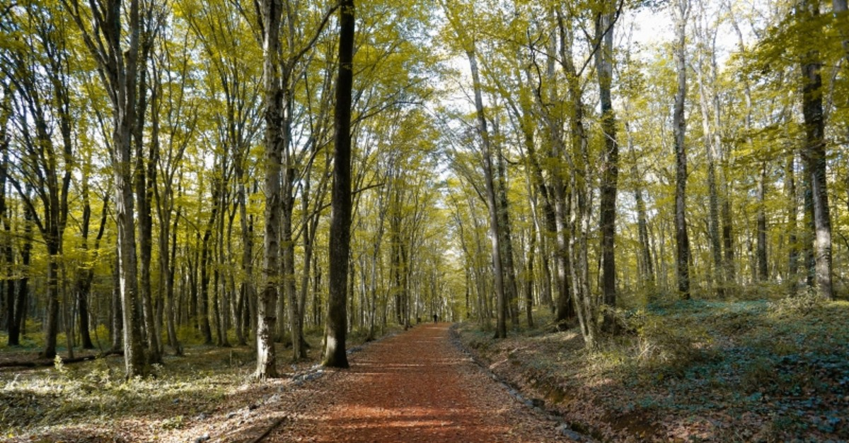 Belgrad Forest (Photo: Sabah / Saffet Azak)