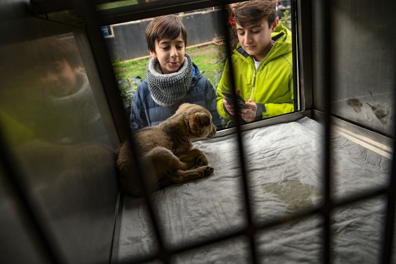Children look at a puppy presentend in a showcase on a Vetbus for adaption on January 31, 2019 at Rumelihisari district in northern Istanbul